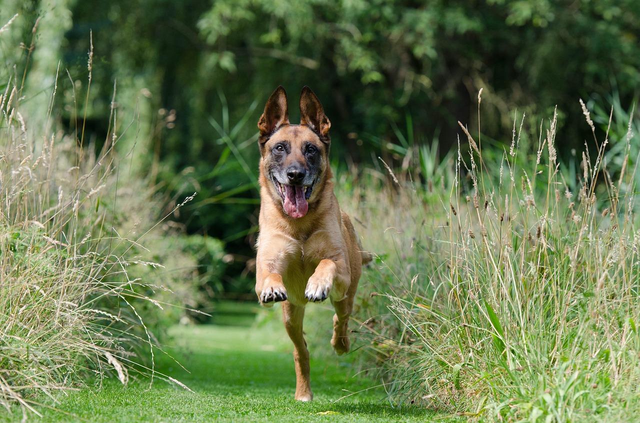 Hond Vriendelijke Tuin : Easterwood hondvriendelijke vakantiewoningen friesland